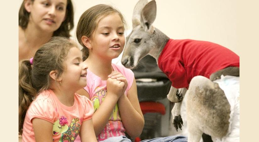Dallas Petting Zoo